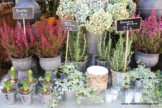 Plantas de temporada en The Workshop Flowers. Foto de www.madridcoolblog.com