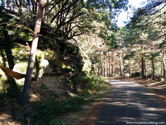 sierra, guadarrama, madrid, cool, blog, escapada, ruta, senderismo, setas, camino