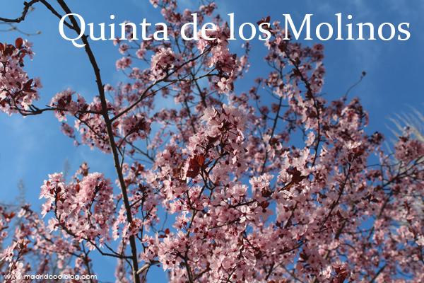 Quinta de los Molinos. Floración del almendro en Madrid.
