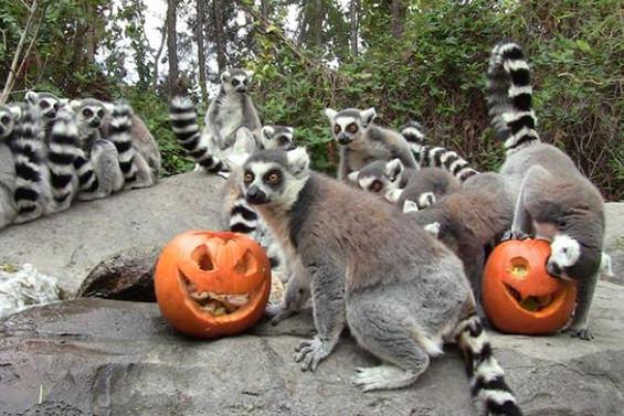 Planes para Halloween en Madrid