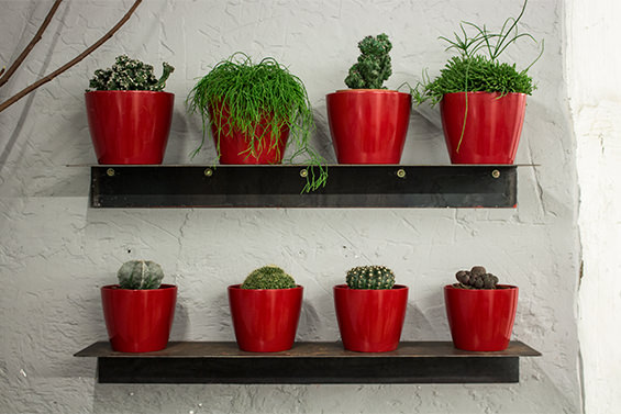 Cacto-Cacto. Cactus en Madrid de los que pinchan y los que no.