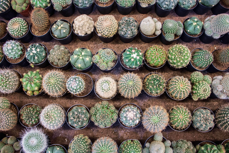 Cacto cacto cactus en madrid de los que pinchan y los que no for Cactus tipos y nombres