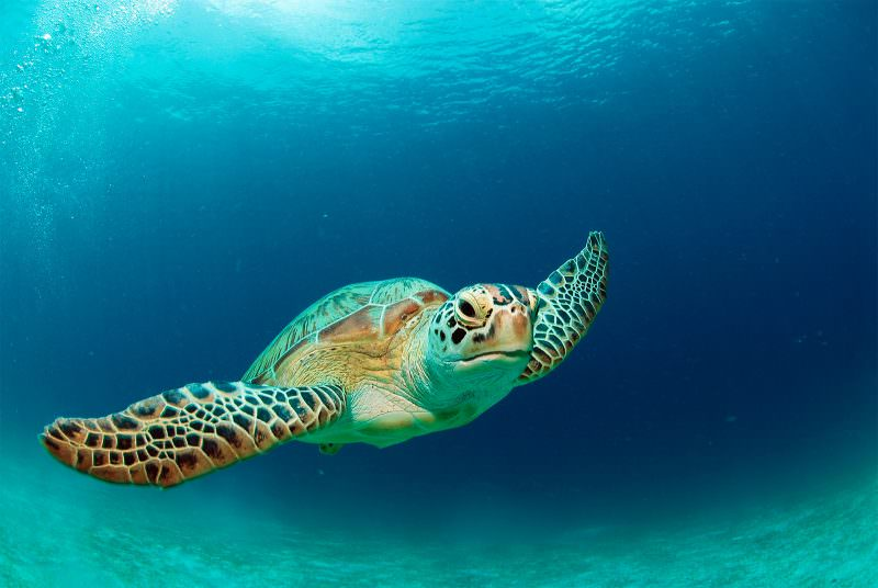 MADRID-COOL-BLOG-FILIPINAS-sea-turtle-G