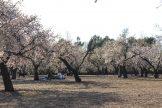 MADRID-COOL-BLOG-QUINTA-DE-LOS-MOLINOS-picnic-G