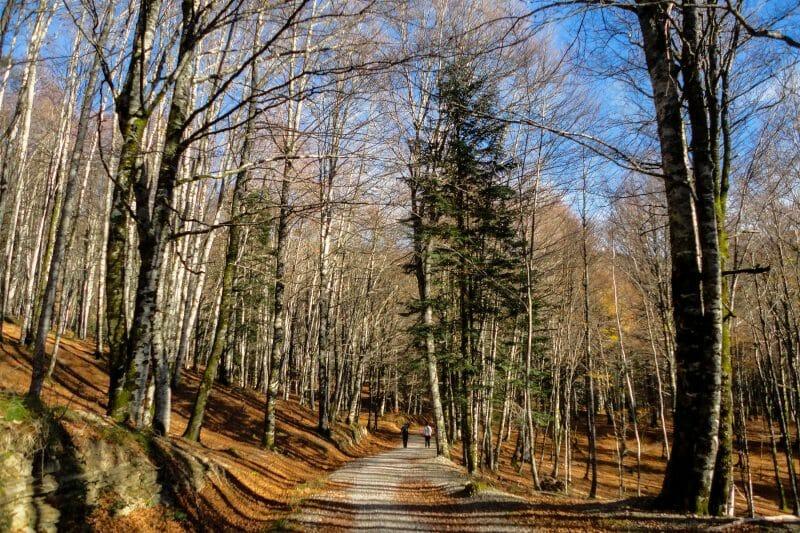 Selva de Irati. Foto de Madrid Cool Blog.