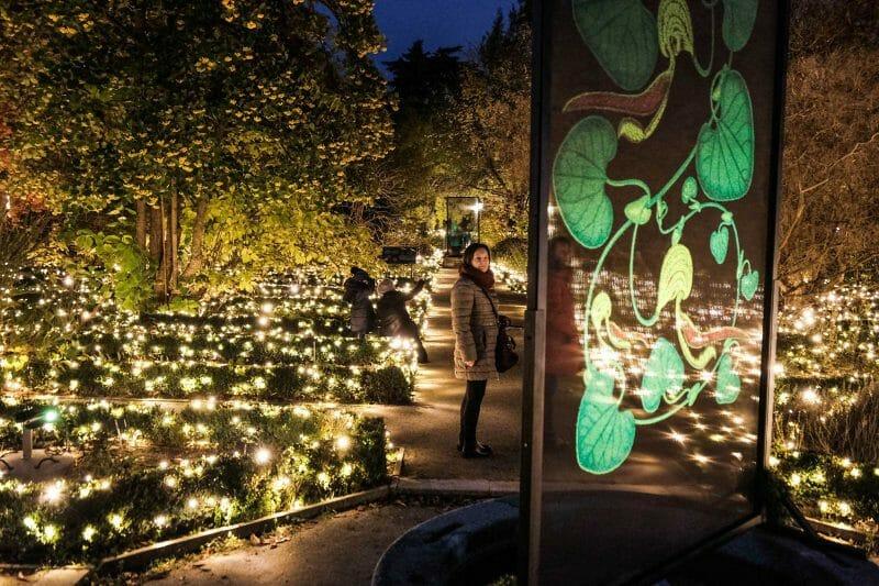 Luces de Navidad en el Jardín Botánico.