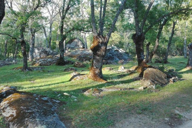 Bosque de La Herrería. Foto de Wikiloc.